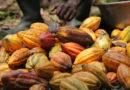 Cacao-café : Le Port autonome de Kribi s'ouvre aux acteurs du secteur