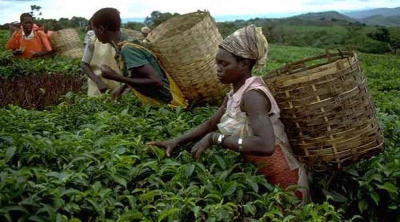 Agriculture: un projet pour booster l'entrepreneuriat jeune